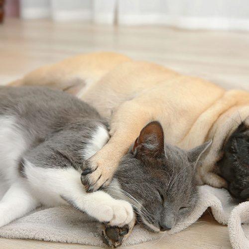 Conseils pour un meilleur sommeil