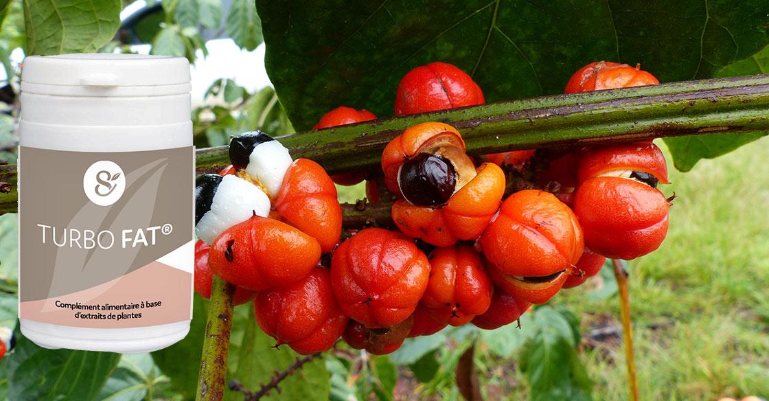 Complément Alimentaire Minceur : Guarana Brûle-Graisse